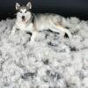 Как бороться с сезонной линькой собак
